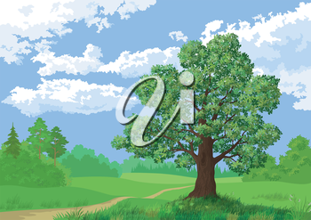 Landscape, summer green forest, oak tree and blue sky. Vector