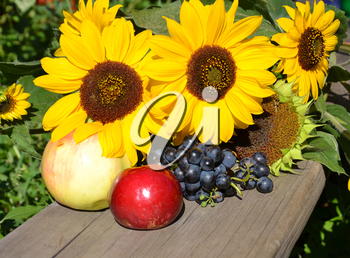 Sunflowers, grapes and apples on a wooden background