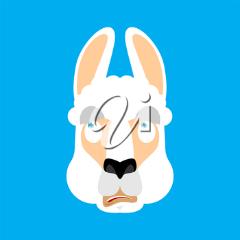 Lama Alpaca was confused emotions face avatar. Animal is perplexed. Beast surprise. Vector illustration