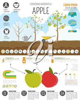 Gardening work, farming infographic. Apple. Graphic template. Flat style design. Vector illustration