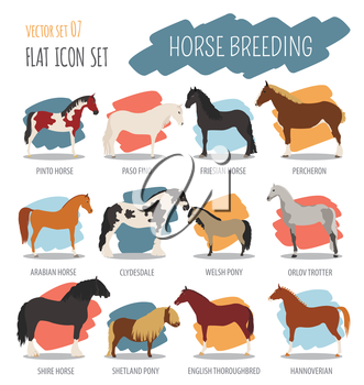 Horse breeding icon set. Farm animal. Flat design. Vector illustration