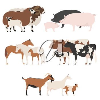 Farm animall family collection. Cattle, sheep, pig, horse, goat icon set. Flat design. Vector illustration