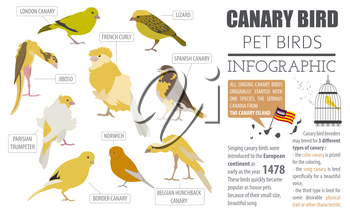 Canary breeds icon set flat style isolated on white. Pet birds collection. Create own infographic about pets. Vector illustration