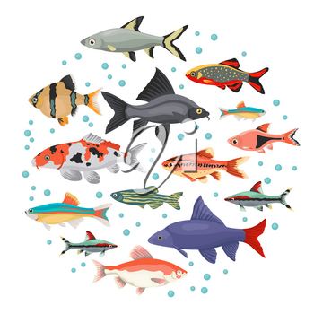 Freshwater aquarium fishes breeds icon set flat style isolated on white. Cyprinids. Create own infographic about pets. Vector illustration
