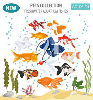Freshwater aquarium fishes breeds icon set flat style isolated on white. Goldfish. Create own infographic about pets. Vector illustration