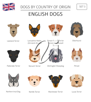 Dogs by country of origin. English dog breeds. Infographic template. Vector illustration
