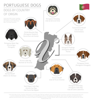 Dogs by country of origin. Portuguese dog breeds. Infographic template. Vector illustration