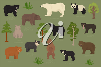 All world bear species in one set. Bears collection. Vector illustration