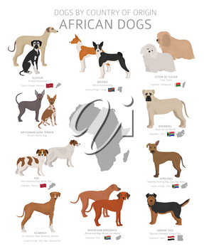 Dogs by country of origin. African dog breeds. Shepherds, hunting, herding, toy, working and service dogs  set.  Vector illustration