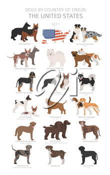 Dogs by country of origin. Dog breeds from the United states of America. Shepherds, hunting, herding, toy, working and service dogs  set.  Vector illustration