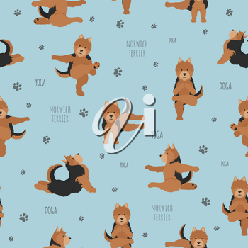 Yoga dogs poses and exercises. Norwich terrier seamless pattern. Vector illustration