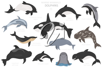 Dolphins set. Marine mammals collection. Cartoon flat style design. Vector illustration