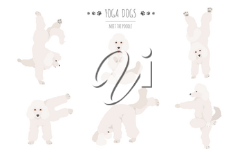 Yoga dogs poses and exercises poster design. Poodle clipart. Vector illustration