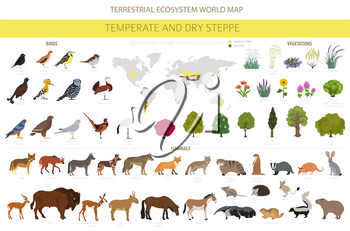Temperate and dry steppe biome, natural region infographic. Prarie, steppe, grassland, pampas. Terrestrial ecosystem world map. Animals, birds and vegetations ecosystem design set. Vector illustration