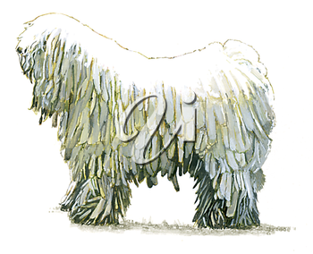Royalty Free Clipart Image of a Komondor Dog
