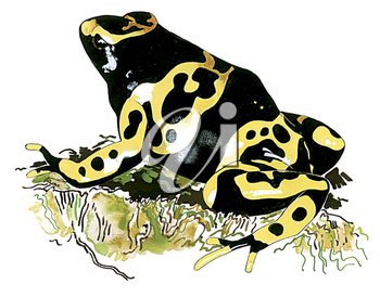 Royalty Free Clipart Image of a Yellow Banded Poison Dart Frog