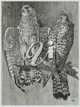 Royalty Free Clipart Image of a Pair of Falcons