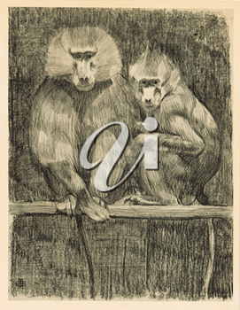Royalty Free Clipart Image of Baboons