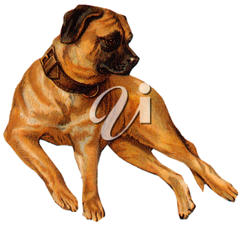 Royalty Free Clipart Image of a Rottweiler