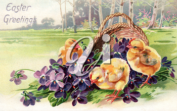 Royalty Free Clipart Image of Spring Chicks and a Basket of Flowers
