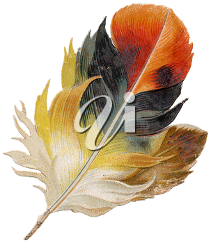 Royalty Free Clipart Image of a Feather