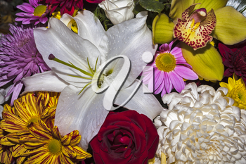 Background from a variety of natural flowers closeup