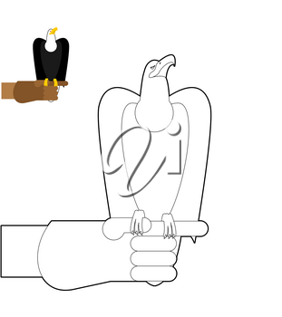 Falconry coloring book. Bird predator sitting on hand in  linear style. Bald Eagle bird hunting