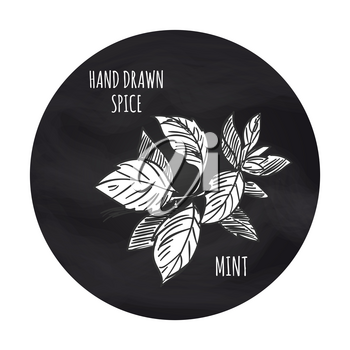 Hand drawn spice vector illustration. Black and white mint icon on blackboard backdrop