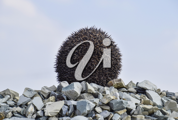 Hedgehog on a pile of rubble. Hedgehog curled up into a ball.