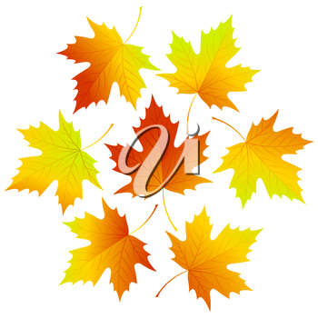 Set fall vector leaves for your design EPS 10