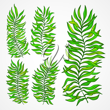 Set of exotic foliage. Vector illustration EPS 10