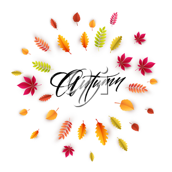 Hello autumn. Different colored autumn leaves background. Vector illustration EPS10