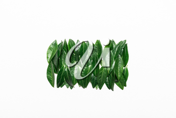 Green leaves on a white background. Minimalistic, eco, eco-friendly, creative concept. View from above