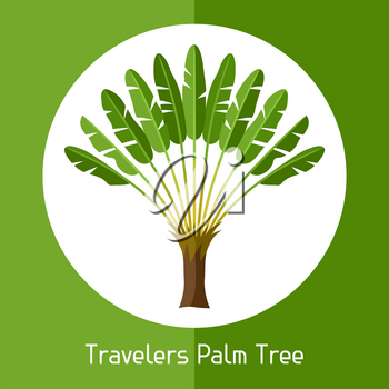 Travelers palm tree. Illustration of exotic tropical plant.