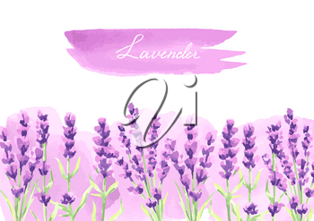 Lavender flowers background design. Watercolor natural illustration of Provence herbs.