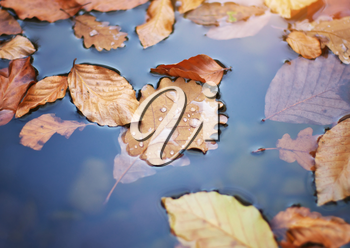 Autumn leafs in water. Nature conceptual composition.