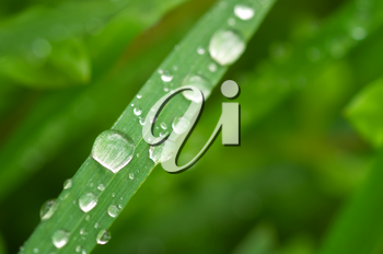 Macro of raindrop. Composition of nature.