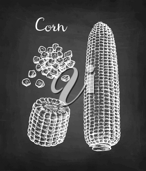 Corncob and handful of corn kernels. Chalk sketch of maize on blackboard background. Hand drawn vector illustration. Retro style.