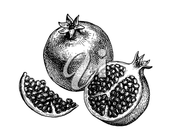 Pomegranate sliced in half and seeds. Ink sketch isolated on white background. Hand drawn vector illustration. Retro style. Editable objects.