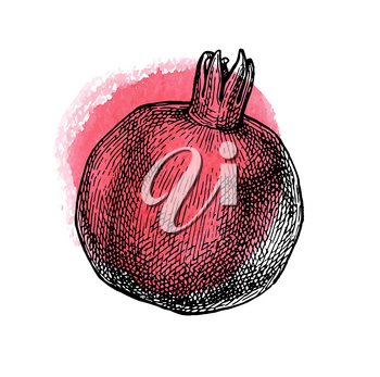 Pomegranate. Ink sketch isolated on white background. Red watercolor stain. Hand drawn vector illustration. Retro style.