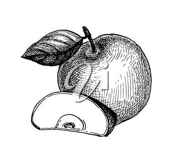 Apple with leaf and slice of fruit. Ink sketch set isolated on white background. Hand drawn vector illustration. Retro style.
