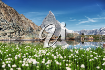 Matterhorn and and grass near lake at the morning time. Beautiful natural landscape in the Switzerland. Mountains landscape at the summer time