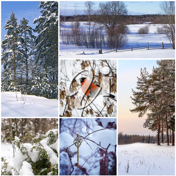 Beautiful winter collage of six different photos.