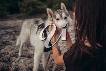 Beautiful girl plays with a dog (grey and white husky) in the mountains at sunset