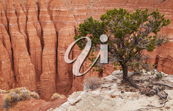 Tree at the canyon edge, Cathedral Valley, Capitol Reef national park, Utah, USA