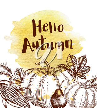 Hand drawn autumn vintage background with leaves, corn and pumpkins