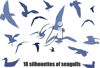 several silhouettes of seagulls in various poses isolated on white background