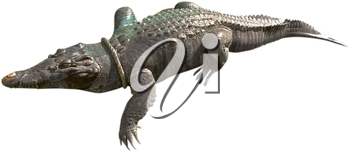 Royalty Free Photo of an Alligator