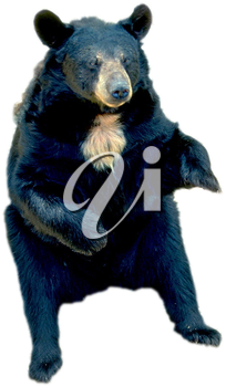 Royalty Free Photo of a Sitting Bear