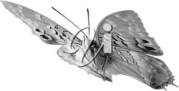 Royalty Free Photo of a Side View of  Moth
